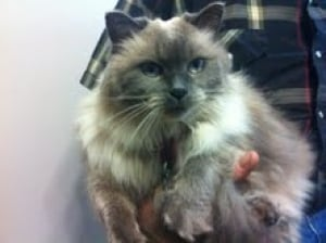 cannings cat fluffy