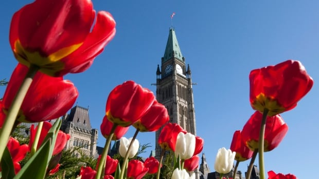 Members of Parliament spent a combined $123.6 million in overall expenses for the fiscal year ending on March 31, 2013, up $2.3 million over the previous year, according to a yearly Commons report.