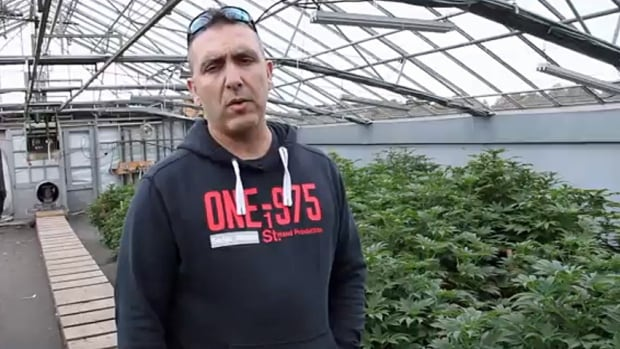 Derek Pedro in his Hamilton area medicinal Marijuana greenhouse. Pedro is one of thousands of medicinal growers affected by new provincial regulations on growing medicinal pot.