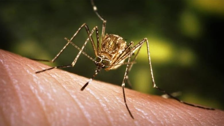 Health Department confirms first case of West Nile Virus in Shelby County