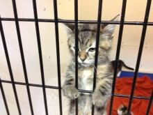 Kitty in jail