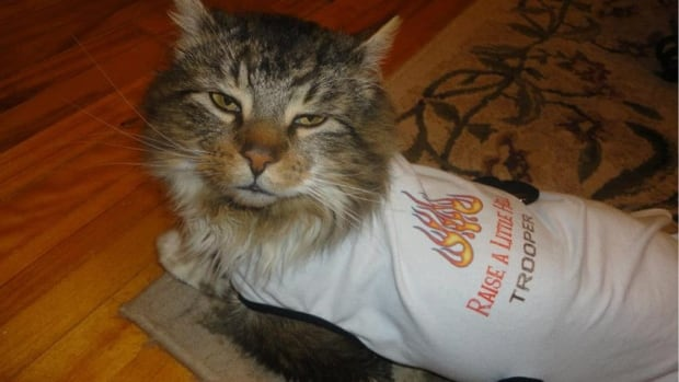Trooper the cat was ready for his big meet-and-greet with legendary Canadian rock band Trooper last summer.