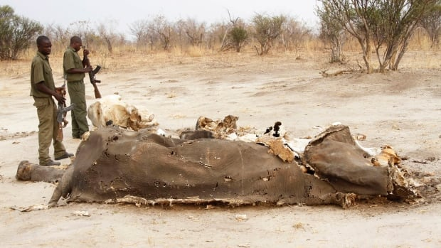 Wildlife officials say at least 91 animals have been poisoned with cyanide by poachers who hack off the tusks for the lucrative illegal ivory market in Zimbabwe.