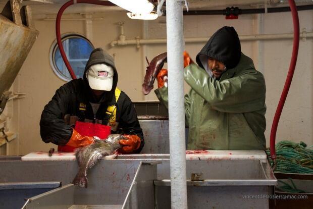 Qikiqtarjuaq turbot fishery