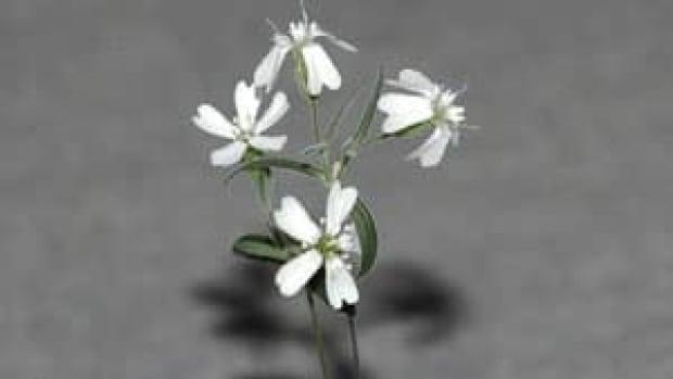 mi-ice-age-flower