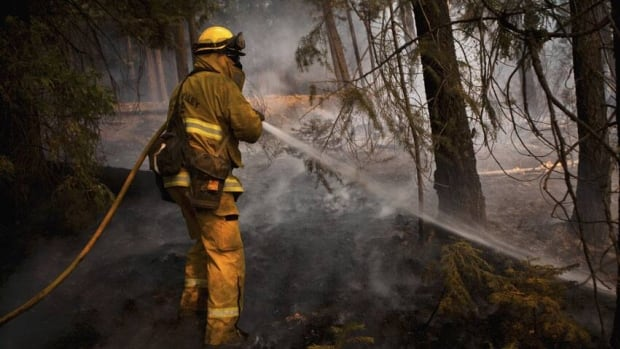 A firefighter battles the Chips fire near Greenville, Calif. The fire, one of many burning in the western U.S, has forced evacuations in Northern California.