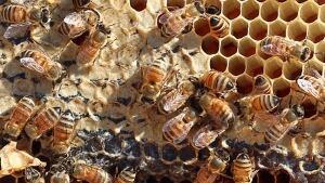 hi-bees-852