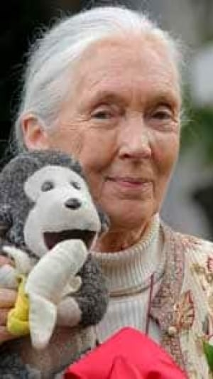 mi-jane-goodall-chimp-attack