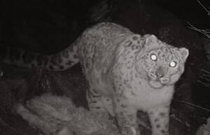 ip-leopard-02232629