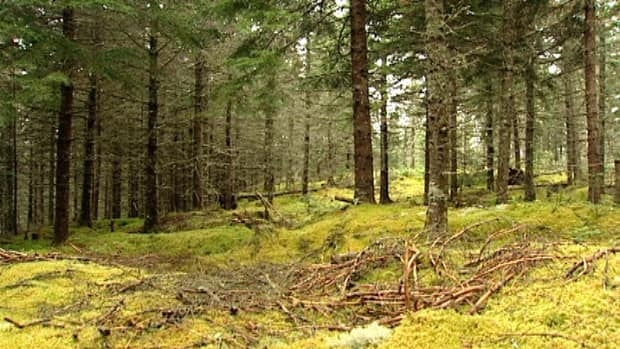 The final agreement with Stern Partners Inc. includes a clause that would allow the newly reopened mill to drop its certification by the Forest Stewardship Council