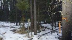 si-matchstickforest-220