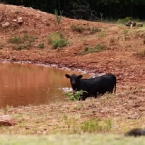 ii-livestock-drought-cp-030