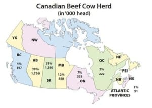 fi-beef-info-canada-beef