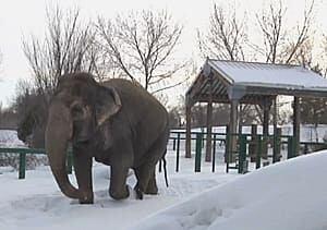 si-lucy-edmonton-zoo