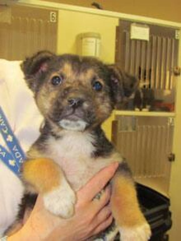 sk-puppy-rescued-120119
