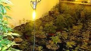 nb-grow-op-codys-220