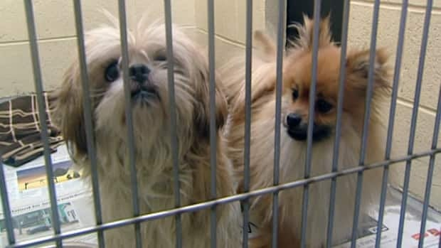 Two puppy mill operators were each fined $1,200 and restricted from breeding dogs for five years.
