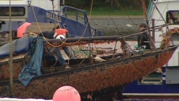 It has been a long journey for The Rascal. The once fine sailboat was abandoned years ago in the Northwest Arm, then sunk over the summer and was raised last month.