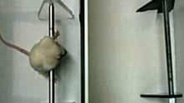 si-rat-still