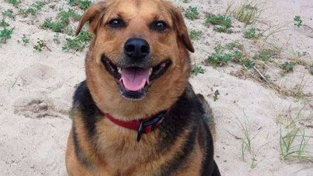 Rob Shura says he wants to see trapping banned in Grand Beach Provincial Park after his dog was caught and killed in a trap.