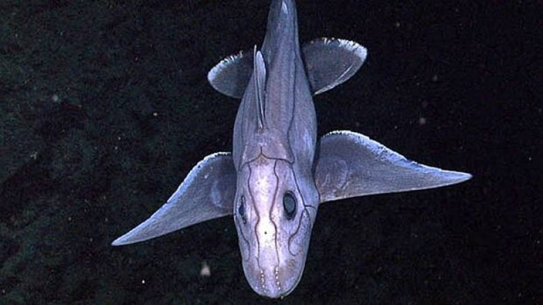 Polynesian Sharks Mouth By Cameron Rutten: James Cameron To Film Deep Sea Documentary