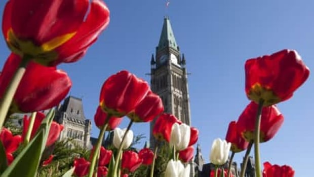 The Canadian Tulip Festival opens this weekend in Ottawa.