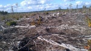 mi-ns-clearcut-highway103