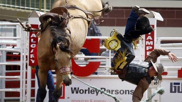 Cory Hines, from Rocky Rapids, Alta., comes off 'Super Neat' during novice saddle bronc action at the Calgary Stampede in Calgary, July 10, 2011. The Stampede celebrates its centennial this year.