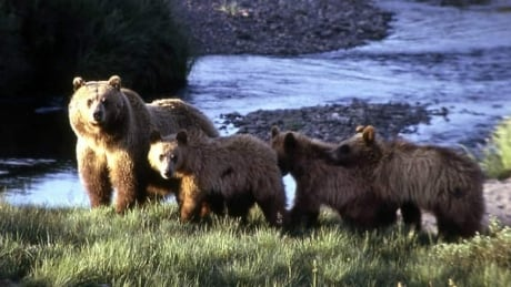 hi-grizzly-mom