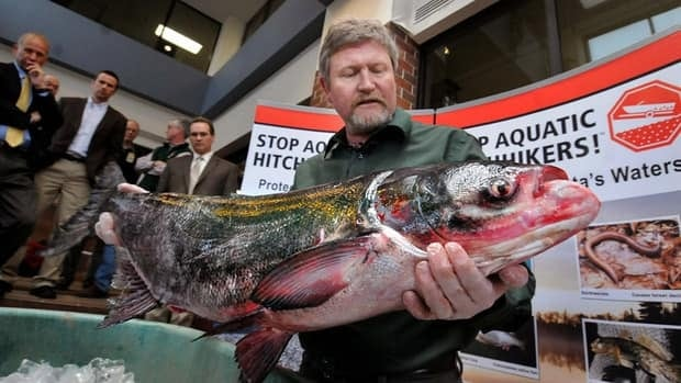 Minnesota fisheries supervisor Brad Parsons holds a 12-kilogram bighead carp at the state's Department of Natural Resources headquarters in St. Paul, Minn. The fish is among several invasive Asian carp species that could cause serious damage to the Great Lakes region's aquatic ecosystems.