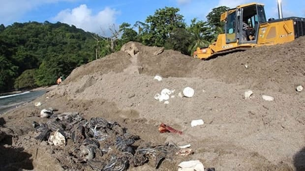 A Ministry of Works employee operates a bulldozer next to destroyed leatherback turtle eggs and hatchlings on the banks of the Grande Riviere Beach in Trinidad.