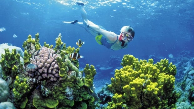 A diver snorkels in the Great Barrier Reef off Australia's Queensland state. A new study by Florida researchers says that climate change can stall the growth of coral reefs for thousands of years.