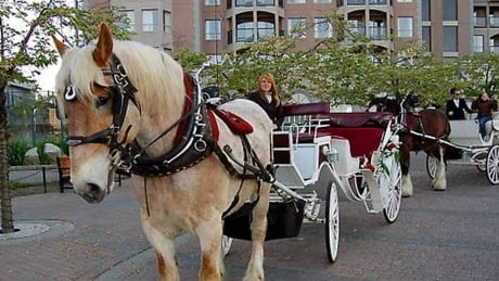 Victoria staff to consider future of horse-drawn carriages in city