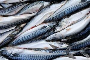 si-mackerel-300-istock