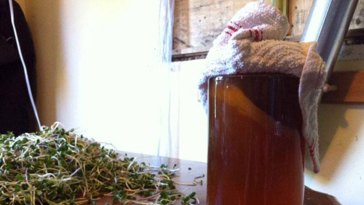 Moncton drinks in Kombucha tea trend