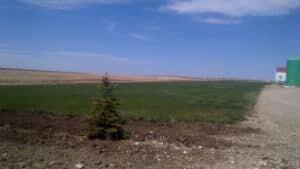 si-airstrip-mossleigh-300