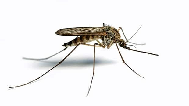 Hamilton has more human cases of West Nile virus.