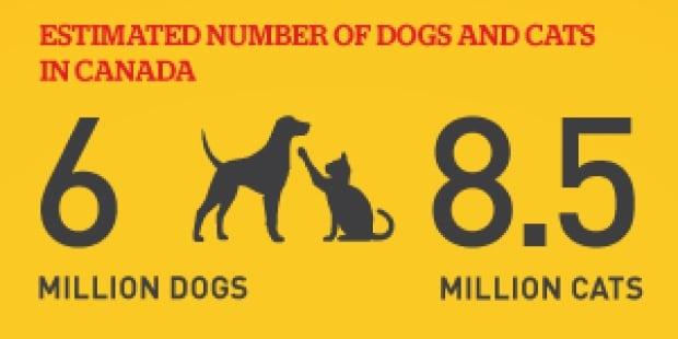 Pet stats 1
