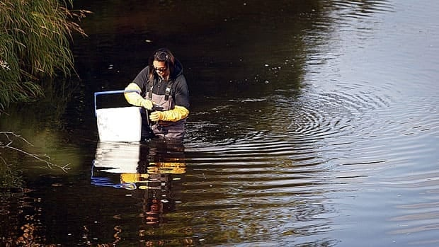 An Alberta technician measures water quality near Fort McMurray last September. The federal government is considering dropping fresh water habitat-protection provisions from the Fisheries Act, the opposition NDP says, reducing Ottawa's role in overseeing Canada's fresh water.