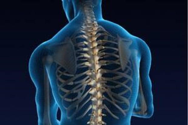 inside-spine-istock_0000083