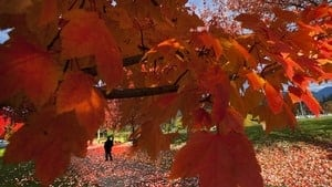 hi-fall-colours-vancouver-rtr2tun4-4col