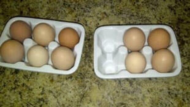 mi-chicken-eggs-300