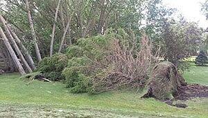 mi-riverton-tree