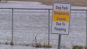 mi-dog-park-flooded-regina
