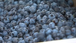 pei blueberries