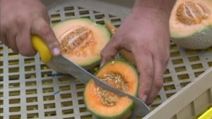 Chris Oram Mark's Market cantaloupe
