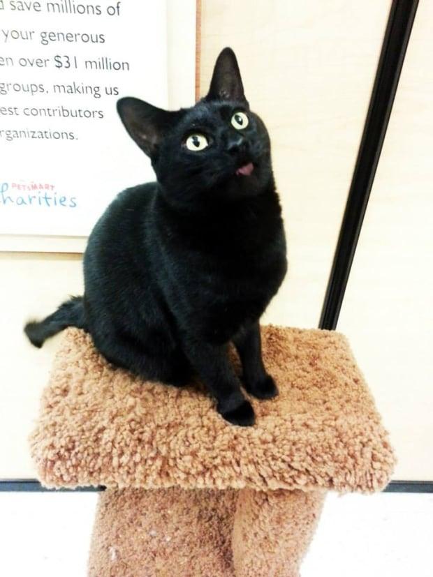 SCAT cat named Gordo