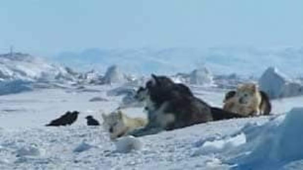 tp-north-sled-dogs-file