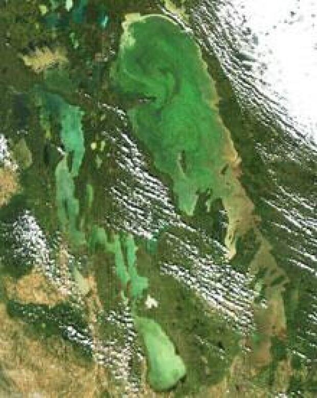 mi-lake-algae