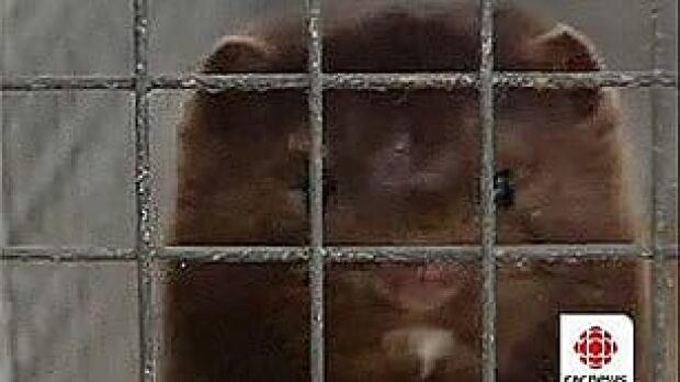 pe-mink-cage2
